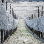Frost Tramin-1389_MGZOOM